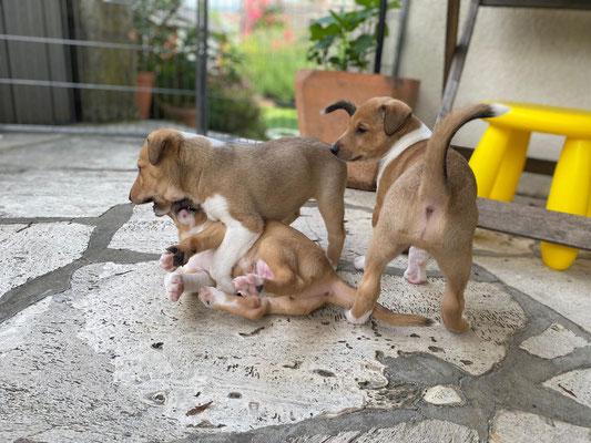 Cooper, Cosma,Cayu