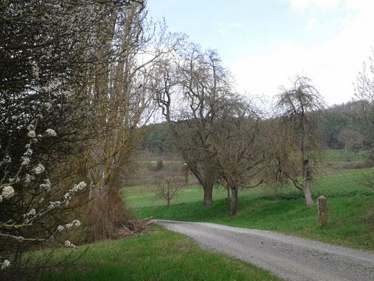 zwischen Friolzheim und Mühlhausen