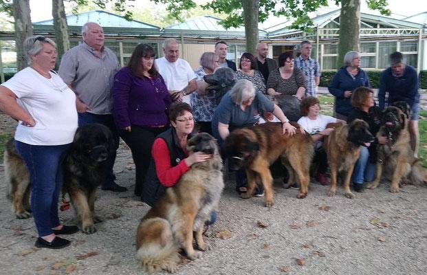 Jährliches Treffen der Züchter von Leonberger Hunden - eine Gruppe aus GB im Herbst 2017