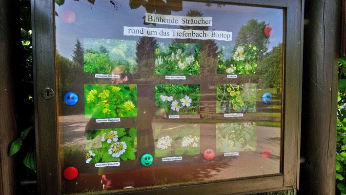 Immer aktuell ist an den Tiefenbachbiotopen eine Infotafel mit Einblicken in die Umgebung