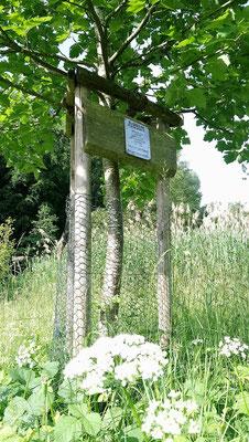 Nach fast 30 Jahren wurde zu Ehren des Gründers der Umweltgruppe - Walter Hartmann - eine Elsbeere gepflanzt