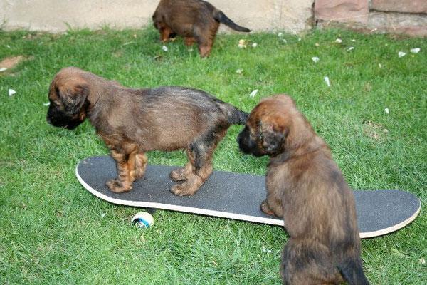 Skateboardfahren lernen sie auch schon