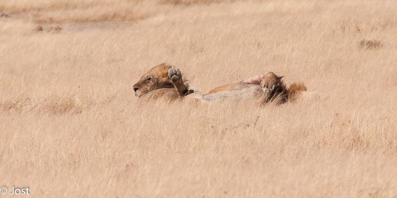 Namibia Etosha