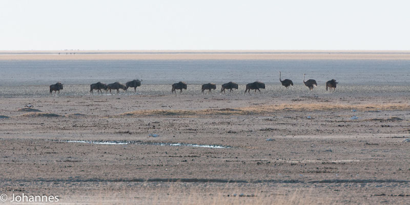 NamibiNamibia Etoshaa Etosha