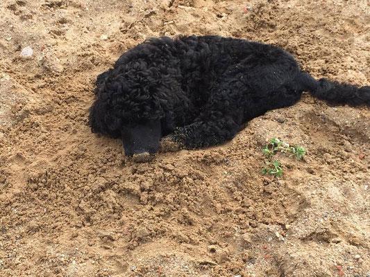 Raisa, das Baby im Sand