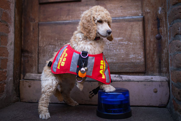 Aki wird ein Rettungshund in SH