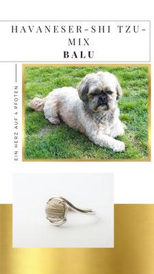 Balu, ein kleiner Havaneser/Shi Tzu Mix, ist der ganze Stolz von Hundemama Elke. Sein Fell ist in einem Stein veredelt worden und in diesem Echtsilber Ring eingefasst.