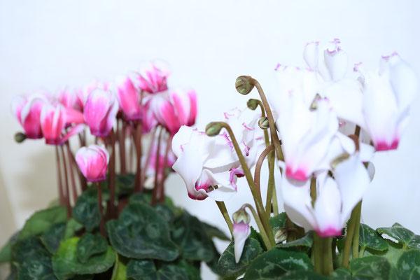 四季折々のお花や観葉植物