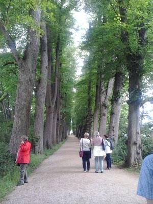 die Lindenallee im Schlosspark