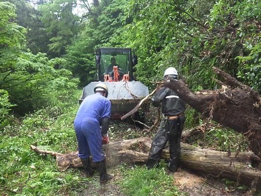 板山川林道倒木処理