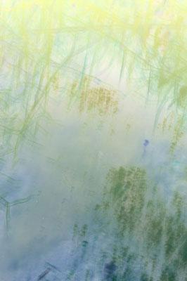 Echos de la mare 1, tirage encres pigmentaires sur papier Arches museum 315g, 50 x 75cm, 10 exemplaires numérotés signés.