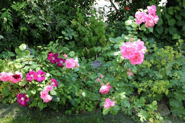 Wir saßen unter und zwischen wunderbar duftenden Rosensträuchern