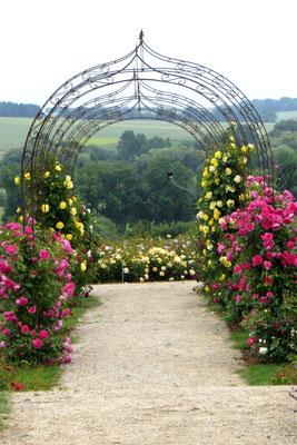 Im Schaugarten des Rosenpark Dräger