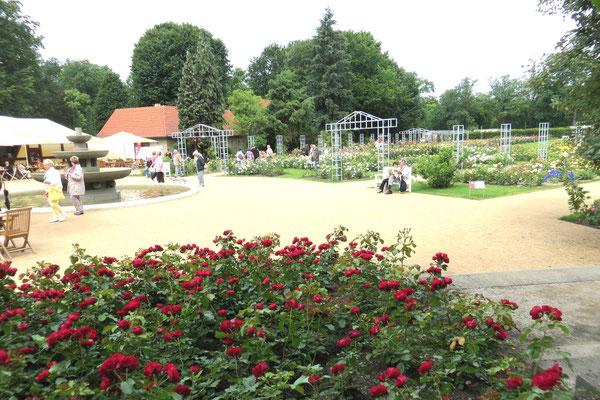 Der Garten der Rosenneuheiten