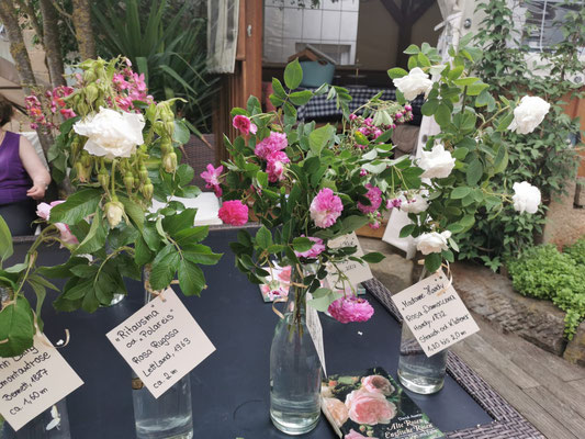 Info-Tisch zu den Rosensorten
