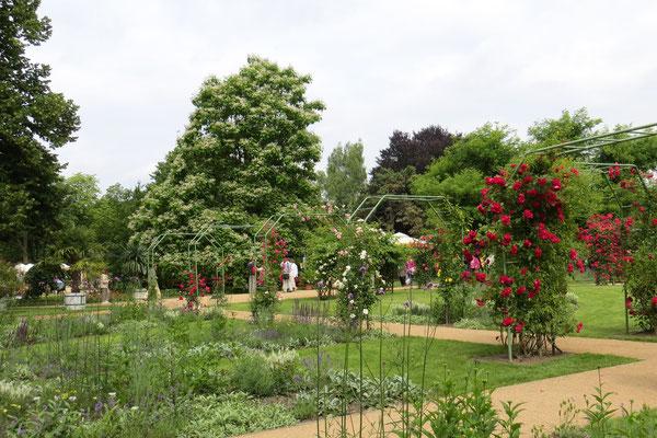 Der Garten mit den Rosenbögen