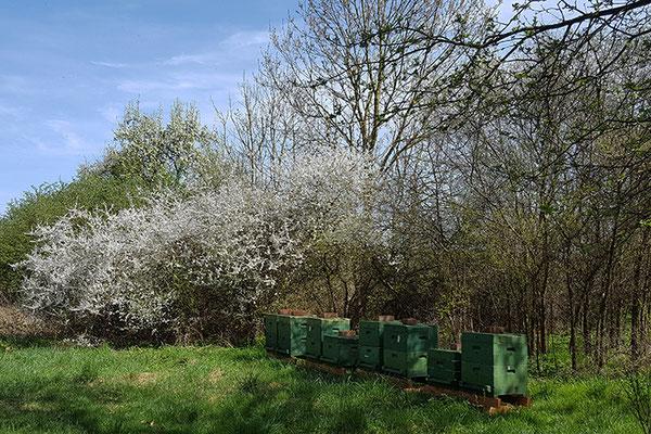 Bienenstand in Hakendorf.