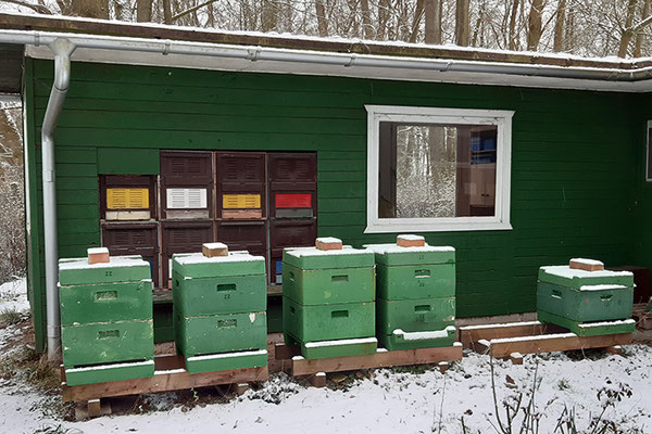 Das Bienenhaus und Zuchtvölker im Frühjahrsschnee.
