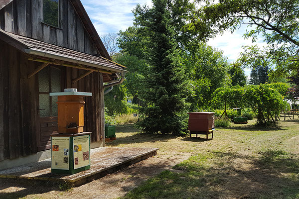 Bienenmuseum mit Schaubeute.
