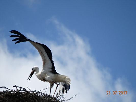 Pepe allein im Nest. Foto: Ulrike Mose