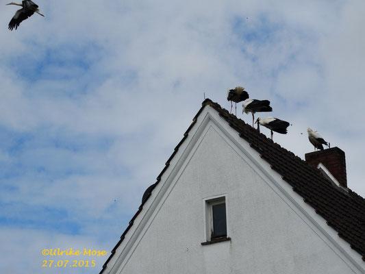 Die Jungstörche vom Riedinger Horst haben ihre Kinderstube verlassen.