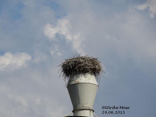 Auf einmal war das Nest leer.