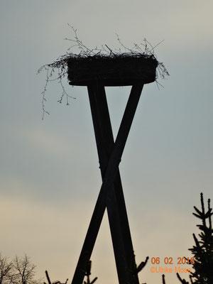 Nest auf dem Riedinger Horst.