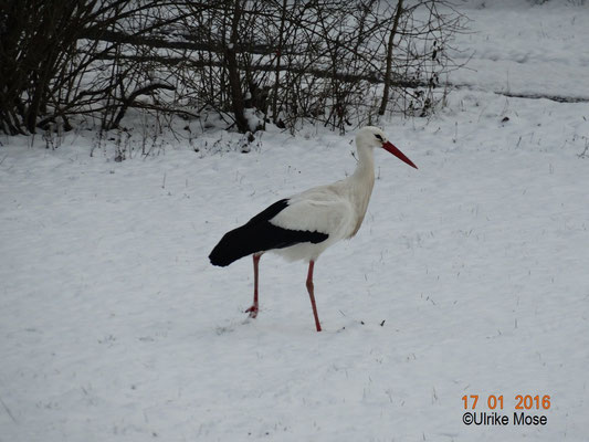 Paul erkundet den schneebedeckten Garten.