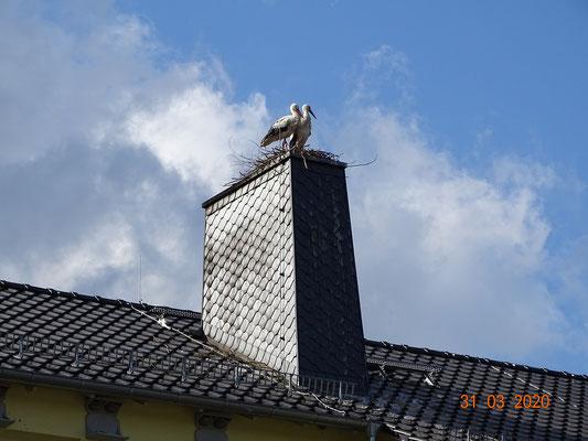 Fühlten sich sichtlich wohl auf ihrem neuen Nest!  Foto: Ulrike Mose