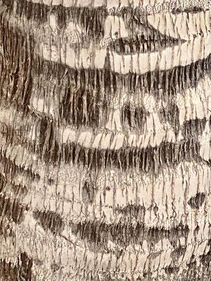 Baumstruktur - 1