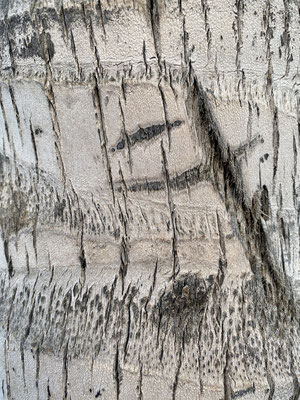 Baumstruktur - 2