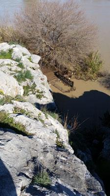 Durch das Hochwasser wurde die 2017 errichtete Besucherplattform beim Felsrelief etwa 20 m flussabwärts verschoben und blieb zum Glück in den Büschen hängen.