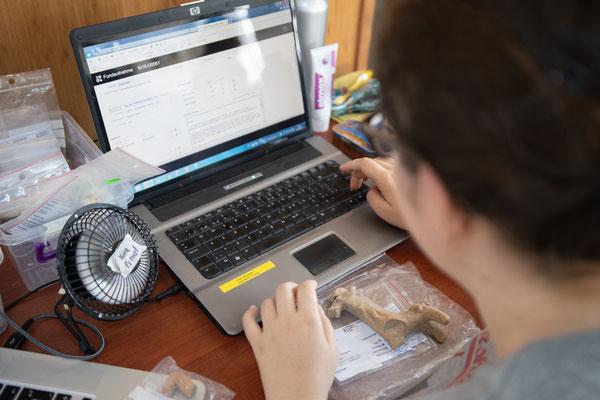 Moira, unsere Spezialistin für Figurinen, erfasst ein Rössli  aus Sektor O in der Datenbank!