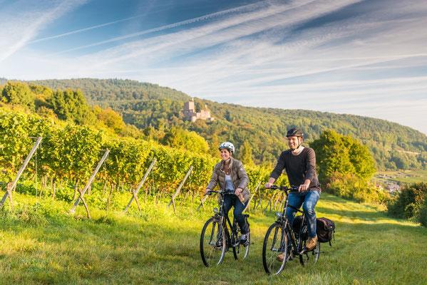 Radfahren in den Weinbergen © Dominik Ketz, RPT GmbH, zur Verfügung gestellt vom Tourismusbüro Bad Bergzabern