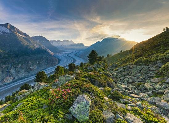 Blick vom Wandergebiet Aletschwald auf den Großen Aletschgletscher (Wallis). © Switzerland Tourism / Andreas Gerth