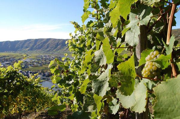 Weinkulturland Mosel © Mosellandtouristik GmbH