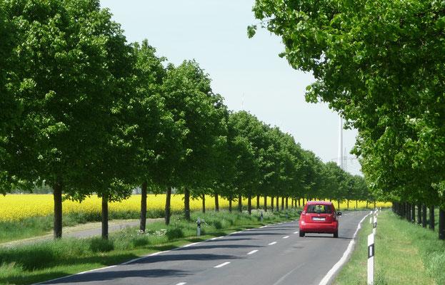 Impressionen der Deutschen Alleenstraße © Arge Deutsche Alleenstraße e.V.