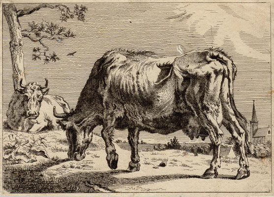 Grasende Kuh, Radierung, Maße: 10,2 x 14 cm, Preis: 200 Euro