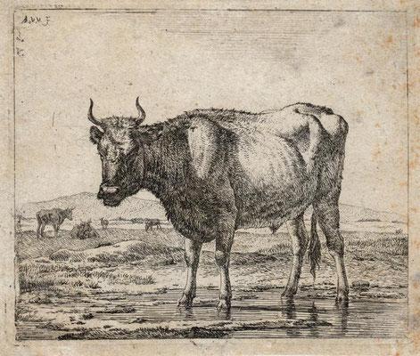 Stehende Kuh auf der Weide, Radierung, Maße: 12,5 x 14,5 cm, Preis: 200 Euro