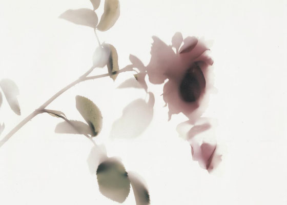 als von der Rose  langsam die Blätter fielen eins nach dem andern, Bildgröße 21 x30 cm, mit Rahmen 30 x 40 cm, Preis: 490 Euro