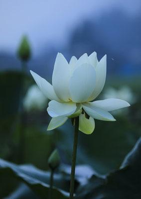 「夜明けの聖」 下野 久雄