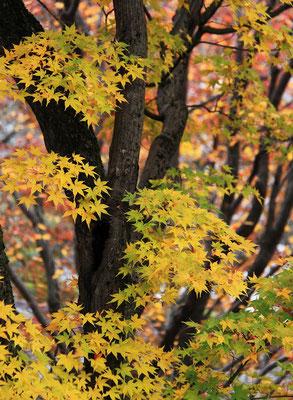 松本幸美 秋色を身にまとい