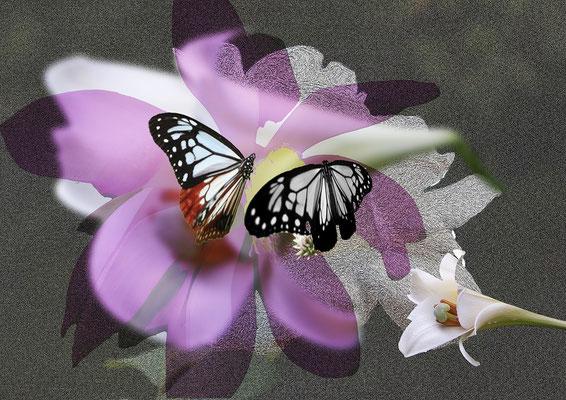 山村 保 幸せを運ぶ蝶
