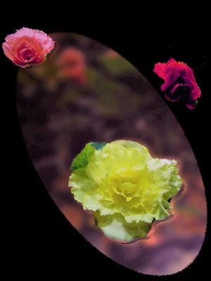 東吉枝 薔薇のデフォルメ