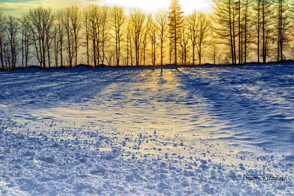 氷点の美「マイルドセブンの丘」 北本 修