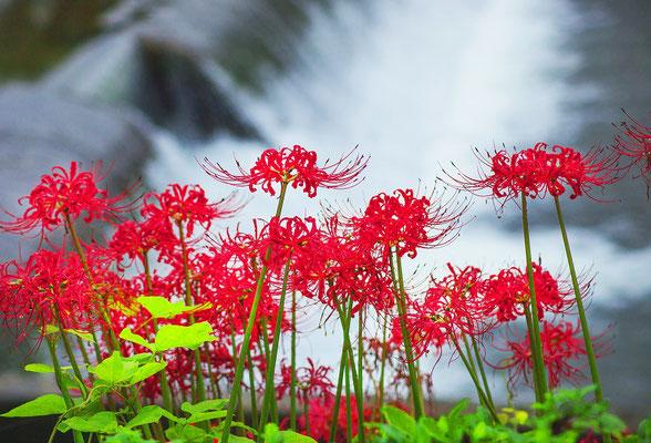 「水際を彩る」 川向 敏夫