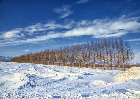 氷点の美「境界林」 北本 修