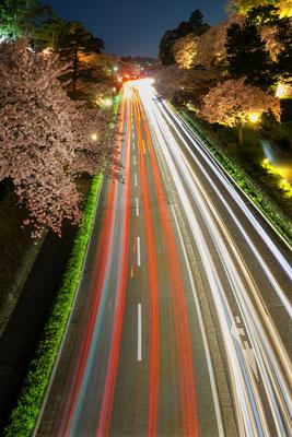 東 優子 桜街道