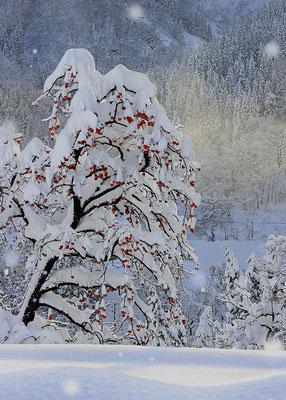 (冬)(山郷の冬) 永原 秀夫