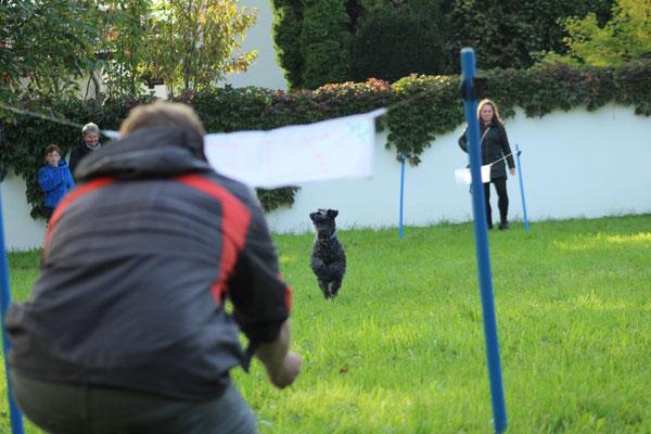 Auch Kerry Blue Terrier Caitlyn darf mitmachen